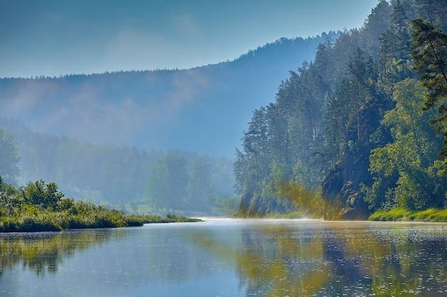 Вид на реку и таежный лес с большим количеством деревьев возле берега в солнечный летний день, природный ландшафт.