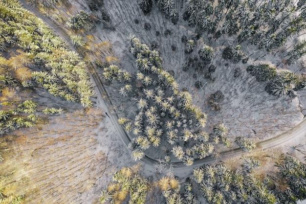 Вид на пустую дорогу в лесу зимой