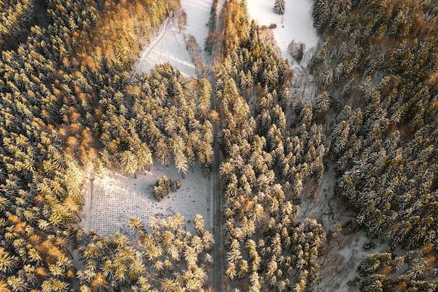 Вид на дорогу в лесу зимой