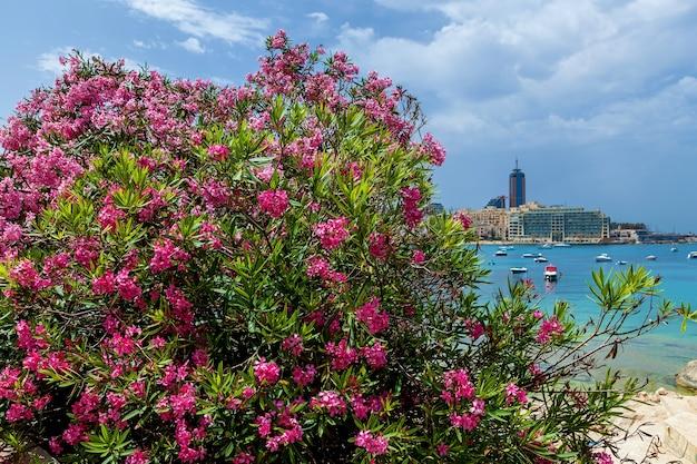 大きなピンクの咲く木があるモダンな建物のある街の海岸の景色