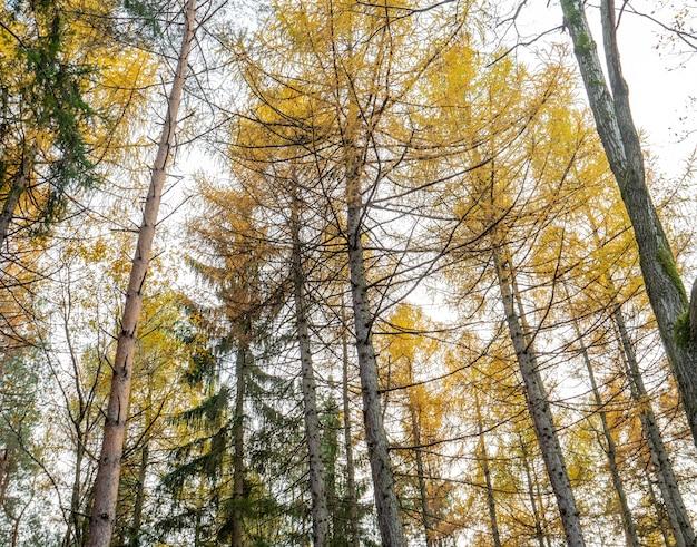 혼합 된 침엽수 림, 폴란드의 나무 꼭대기에서보기