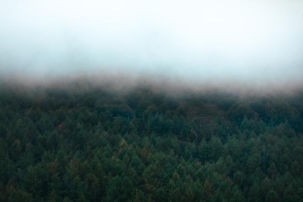 秋の色の森を見渡す