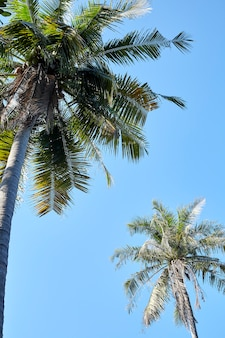 View of palm trees against clear sky