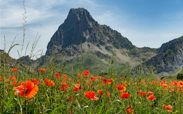View of the pic du midi d'ossau in the french pyrenees with poppies