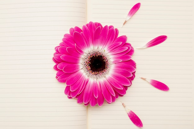 Above view pink daisy on notebook