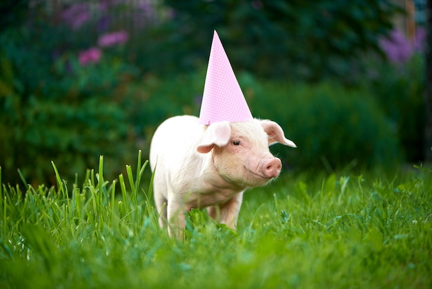 View of pink piggy standing in garden on green grass and looking at camera.