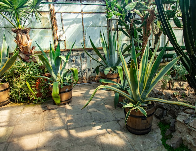 View on plants in alley in the palm greenhouse