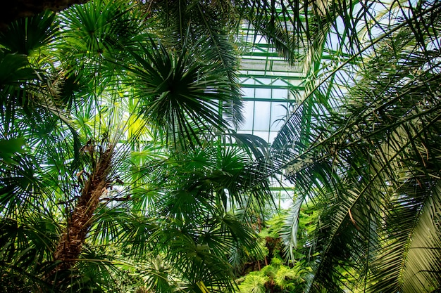 View on plants in the palm greenhouse