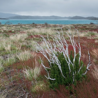 View of plants with lake in the background, w-trek, torres del paine national park, patagonia, chile