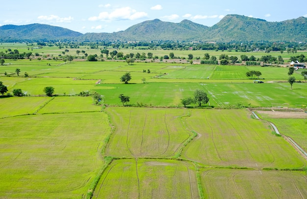 View of rice fields in thailand