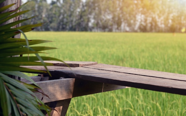 The view of the rice fields with beautiful rice fields and the warmth of the sun.