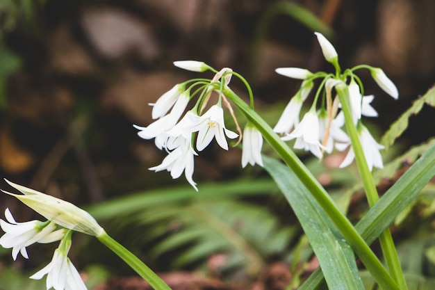 View of snowdrops in wood