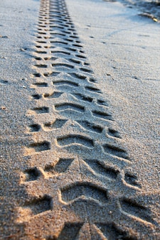 View of some tire tracks on the sand along the beach shore.