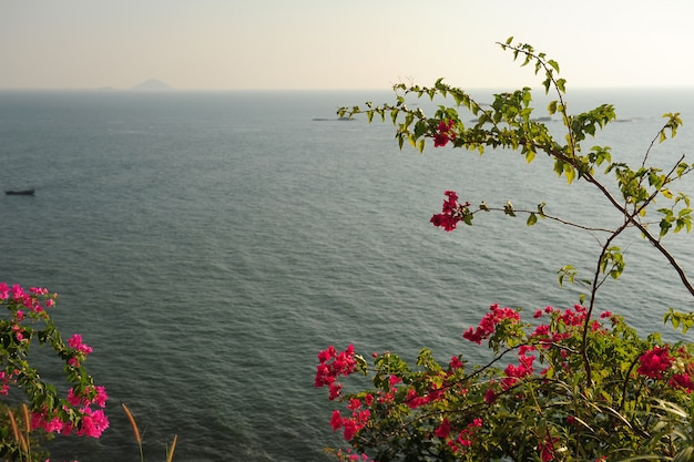 View through the branches of trees with pink flowers on the sea in a cloudy haze. flowering bushes in sunlight against the blue sea. beautiful natural landscape with copyspace.