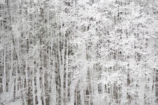흰 서리로 덮여 눈 덮인 아름다운 하얀 숲보기