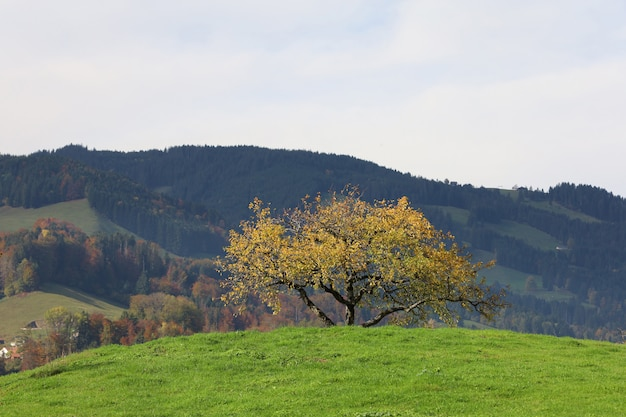 View of the tree in autumn and mountain