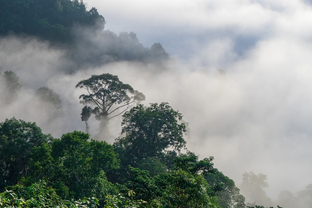 View of trees covered by fog in aiyoweng district, southern thailand.
