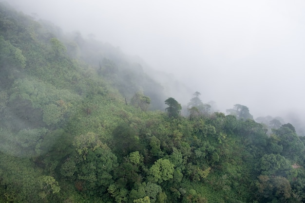 Above view of tropical rainforest in foggy day