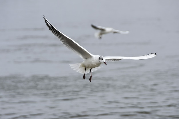 View of two seagulls flying over the water