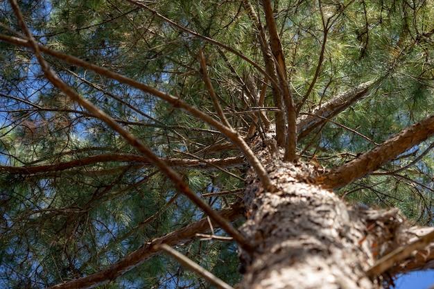 松の木の下の景色はとてもよく似合います。