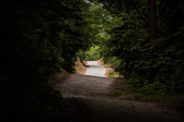 Vista di una strada irregolare circondata da alberi ad alto fusto - concetto: misterioso