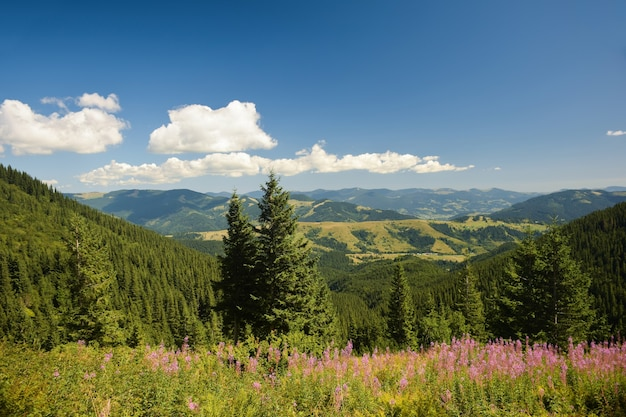 View of the valley from the top on a background of green mountains and blue sky with clouds and flowers