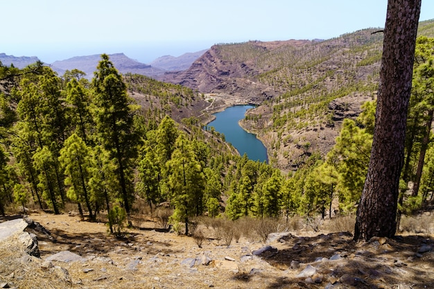 View to the valley from the top of the mountain with pine trees and lake with water on the island of gran canaria. spain, europe