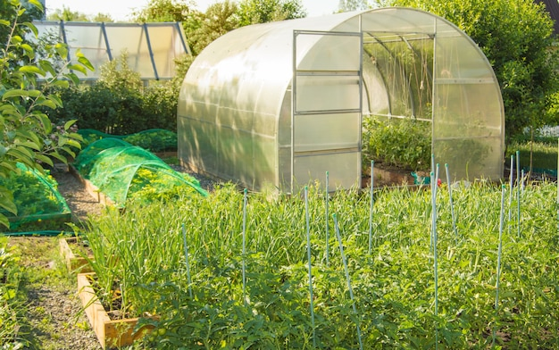 View of a vegetable garden with vegetable beds of tomatoes, carrots and a semicircular polycarbonate greenhouse. home gardening.