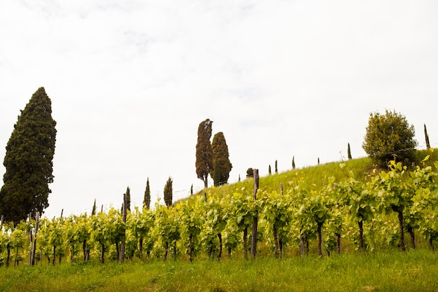 View of vineyards
