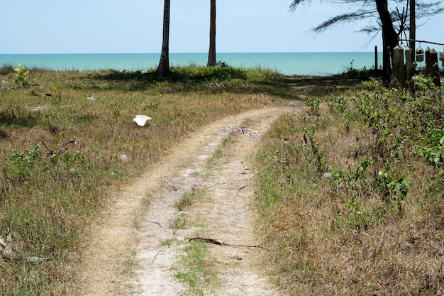 View of the walkway to the beach through the coconut plantation