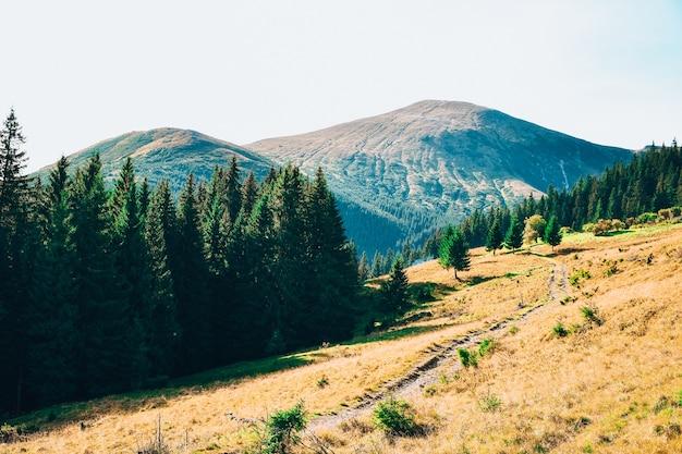 Вид во время восхождения на гору говерла. вид на горы, леса и облака. украинские карпаты. синее небо. природный пейзаж