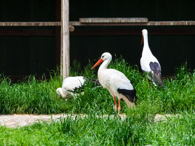 View of white storks