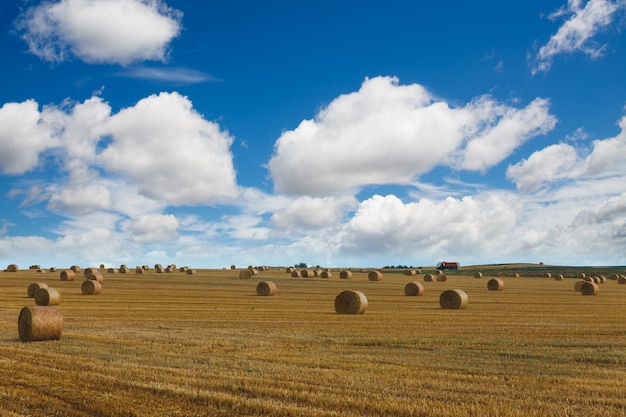 View of a wide harvested field with big yellow straw bales under the blue sky