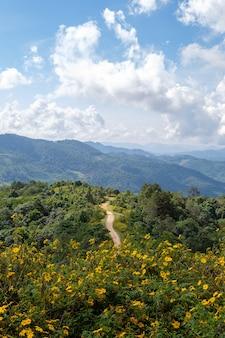 メキシコのヒマワリ(マリーゴールドの木)の視点。