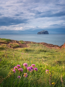 Views of bass rock island with lighthouse from beach with spring flowers in north berwick, scotland