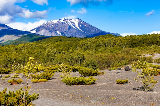 Views of kozelsky volcano and the foot of the avachinsky volcano on kamchatka peninsula