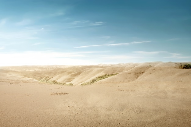 砂丘の景色