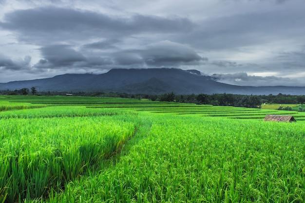インドネシアの曇った覆われた山々と広大な緑の水田の景色
