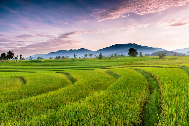 Views of rice fields and mountains in the morning