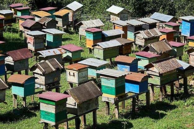 직접 만든 벌집이 있는 고지대 마을 양봉장