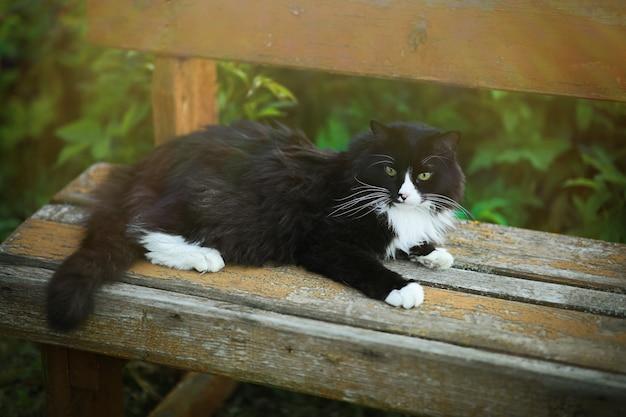 오래된 벤치에 흰 반점이 있는 마을 검은 고양이