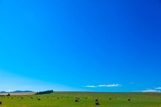 村の生活:冬の干し草の収穫。動物飼料。フィールドの干し草の束