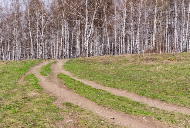 春先の白樺の木の村の道。 4月の森と最初の緑の草のある風景
