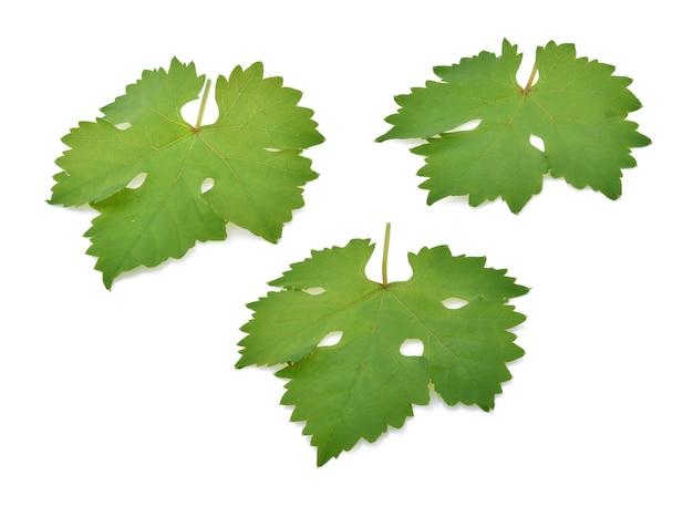 Листья винограда, изолированные на фоне