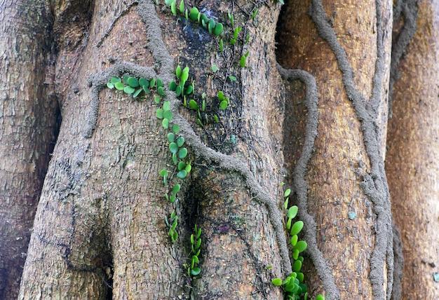 木の幹のつるやシロアリの家。