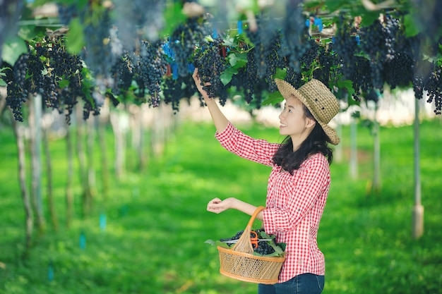 Виноградники-фермеры, которые улыбаются и наслаждаются урожаем.