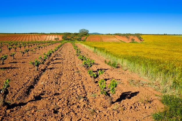 Vineyard fields in extremadura of spain
