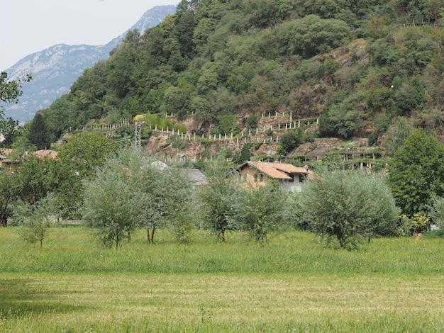 Aosta valley의 포도원 포도밭