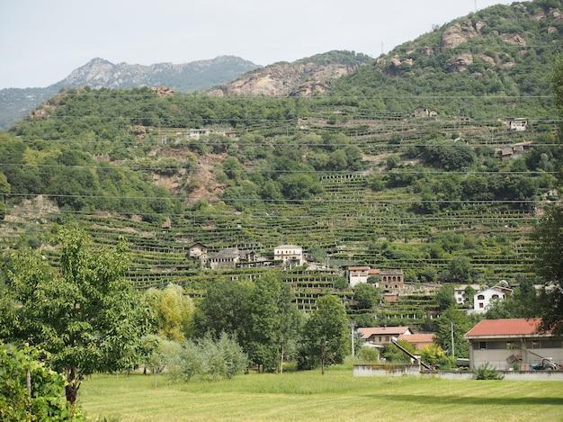 Aosta Valley의 포도원 포도밭 프리미엄 사진