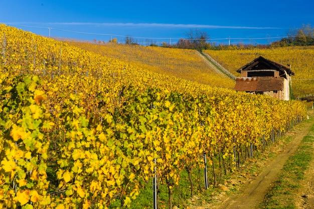 秋のブドウ畑の丘